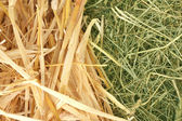 Golden hay and straw texture background close-up — Stock Photo