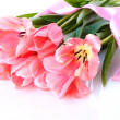 Beautiful pink tulips isolated on white — Stock Photo