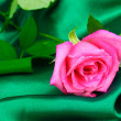 Beautiful rose on green cloth — Stock Photo