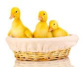 Three duckling in basket isolated on white — Stock Photo