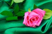 Linda rosa no pano verde — Fotografia Stock
