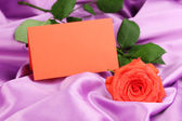Beautiful rose on lilac cloth — Stock Photo