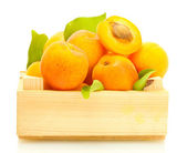 Ripe apricots with green leaves in wooden box isolated on white — Stock Photo