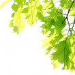 Maple leaves in park - Stock Photo
