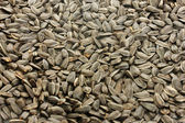 Sunflower seeds background — Stock Photo