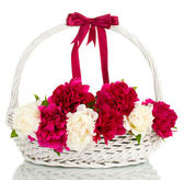 Beautiful pink and white peonies in basket with bow isolated on white — Stock Photo