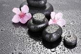 Piedras spa con gotas y sakura rosa flores sobre fondo gris — Foto de Stock