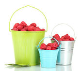 Fresh raspberries in buckets isolated on white — Stock Photo