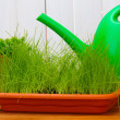 Green grass in a flowerpots and watering can on white wooden background — Stock Photo #11609303
