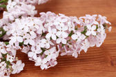 Branch of pink lilac on wooden background close-up — Stock Photo