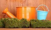 Мох зеленый с лейкой и металлические ведра на деревянных фоне — Стоковое фото
