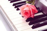 Background of synthesizer keyboard with rose — Stock Photo