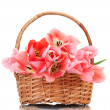 Beautiful pink tulips in basket isolated on white — Stock Photo #11633393