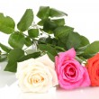 Beautiful roses isolated on white — Stock Photo