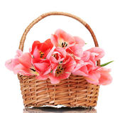 Beautiful pink tulips in basket isolated on white — Stock Photo