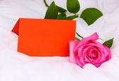 Beautiful rose on white cloth — Stock Photo