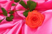Wunderschöne rose auf rosa stoff — Stockfoto