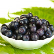 Ripe blueberries in white saucer on fern close-up - Stock Photo