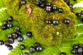 Blueberries on moss and fern close-up — Stock Photo