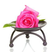 Beautiful rose on metal stand isolated on white — Stock Photo