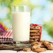 Stock Photo: Glass of milk, chocolate chips cookies with red ribbon and wildflowers on wooden table on green background