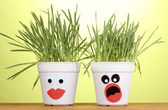 A pots of grass on green background — Stock Photo
