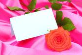 Piękna róża na różowe szmatki — Zdjęcie stockowe