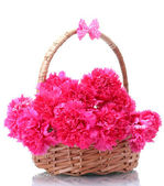 Beautiful pink carnations in basket isolated on white — Stock Photo