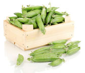 Green peas in crate isolated on white — Stock Photo