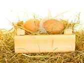 Brown eggs in a wooden box on hay on white background — Stock Photo