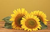 Sunflowers on yellow background — Stock Photo