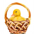 Duckling in basket isolated on white - Stock Photo
