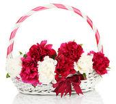 美丽的粉红色和白色牡丹在篮子里用弓上白色隔离 — 图库照片