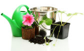 Watering can, bucket, and plants in flowerpot isolated on white — Stock Photo