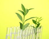 Zkumavky s transparentní řešení a rostlin na žlutém pozadí detail — Stock fotografie