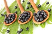 Smakelijke bosbessen in houten lepels op fern close-up — Stockfoto