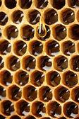 Gelbe schönen Waben mit Honig, Hintergrund — Stockfoto