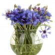 Cornflowers in glass vase isolated on white — Stock Photo