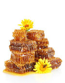 Sweet honeycomb with honey, bee on flowers, isolated on white — Stock Photo