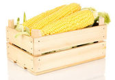 Fresh corn cobs in crate isolated on white — Stock Photo