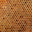 Yellow beautiful honeycomb with honey, background — Stock Photo