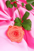 Beautiful rose on pink cloth — Stock Photo