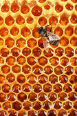 żółty piękny plaster miodu z miodem i pszczoła, tło — Zdjęcie stockowe