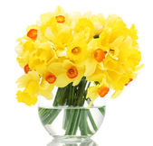 Beautiful yellow daffodils in transparent vase isolated on white — Stock Photo