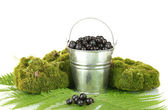 Blueberries in bucket on moss and fern background close-up — Stock Photo