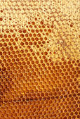 Yellow beautiful honeycomb with honey, background — Stock fotografie