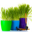 Stock Photo: Beautiful grass in a flowerpots and garden tools isolated on white