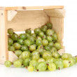 Green gooseberry in crate isolated on white - Stockfoto