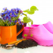 Watering can, galoshes, tools and plants in flowerpot isolated on white — Stock Photo #11877411