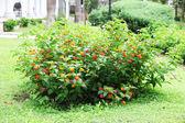 Parco fioritura bush e prato verde — Foto Stock